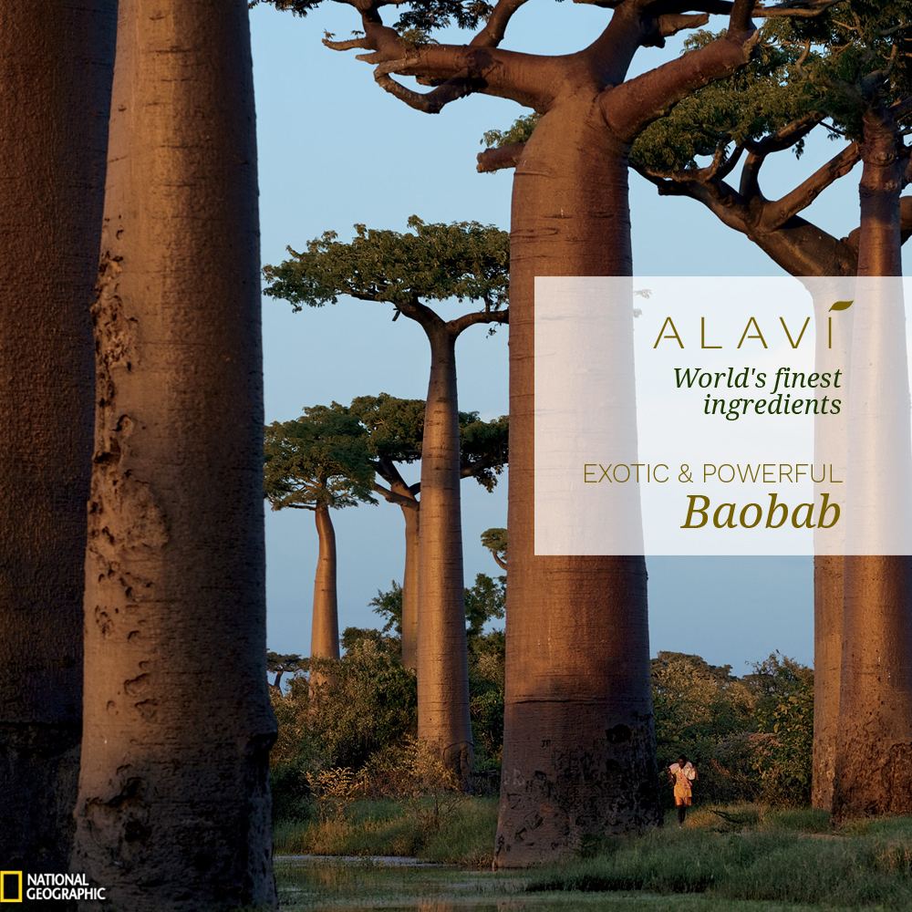 Baobab - exotic and powerful