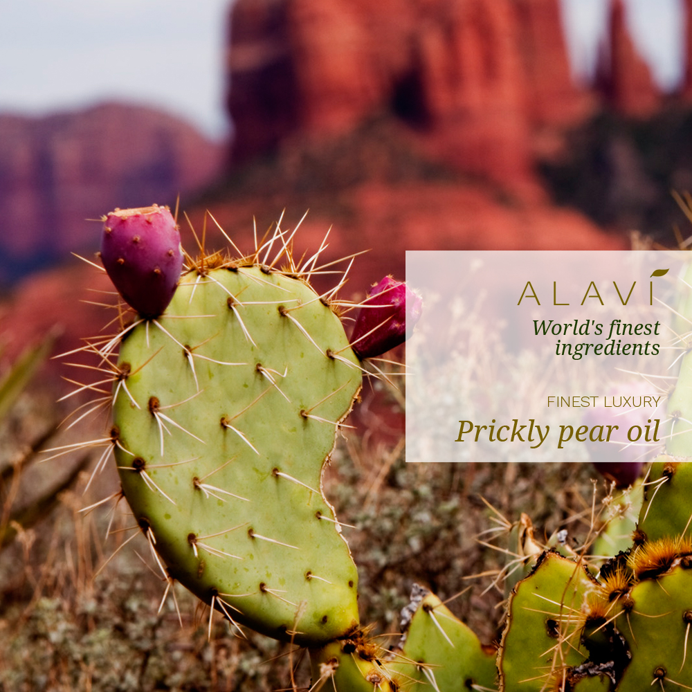 Prickly pear oil - finest luxury