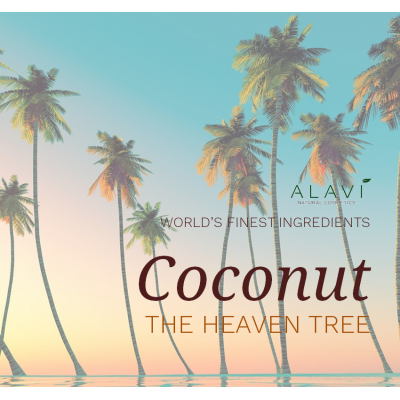 Coconut  - the heaven tree