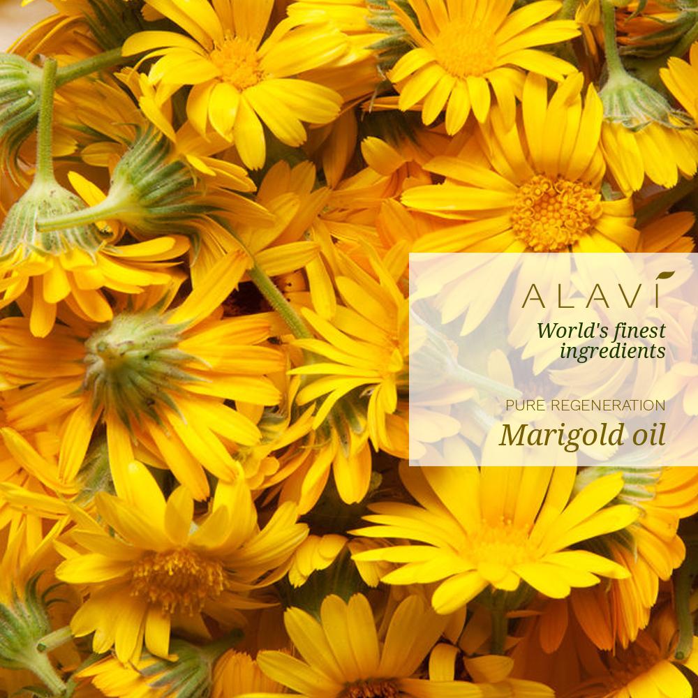 Marigold - pure regeneration